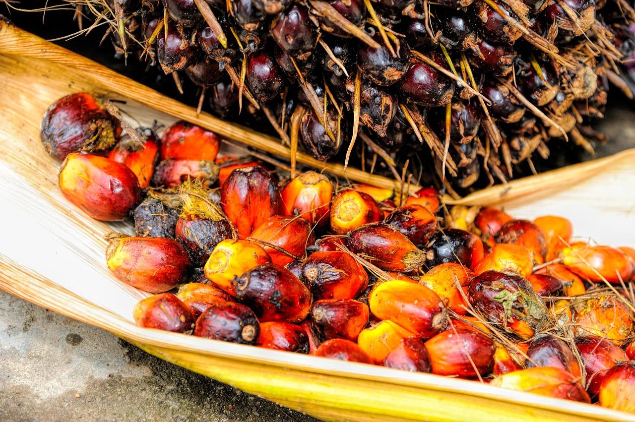 Dlaczego olej palmowy jest taki zły?
